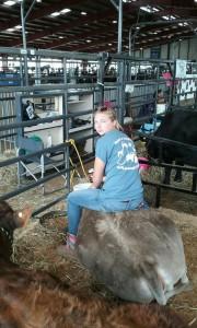 heifer 1