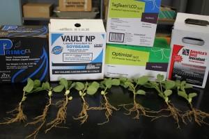 Soybean Nodulation 020 web