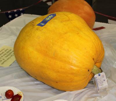 massive-pumpkin