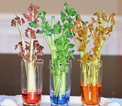 Celery & Food Coloring