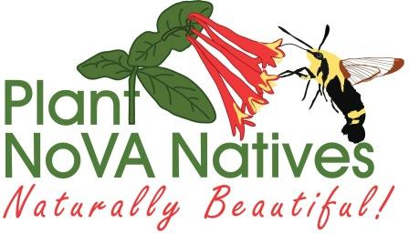 plant-nova-natives