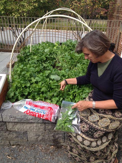 Kirsten picking greens
