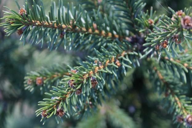 Meet Millfarm Christmas Trees And Berry Farm Central Virginia  - Christmas Tree Farm In Virginia