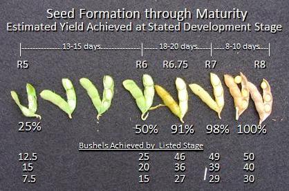 Seed Formation through Maturity