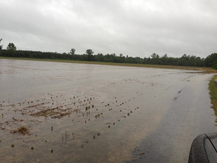 Flooding Soybean Dinwiddie 2013