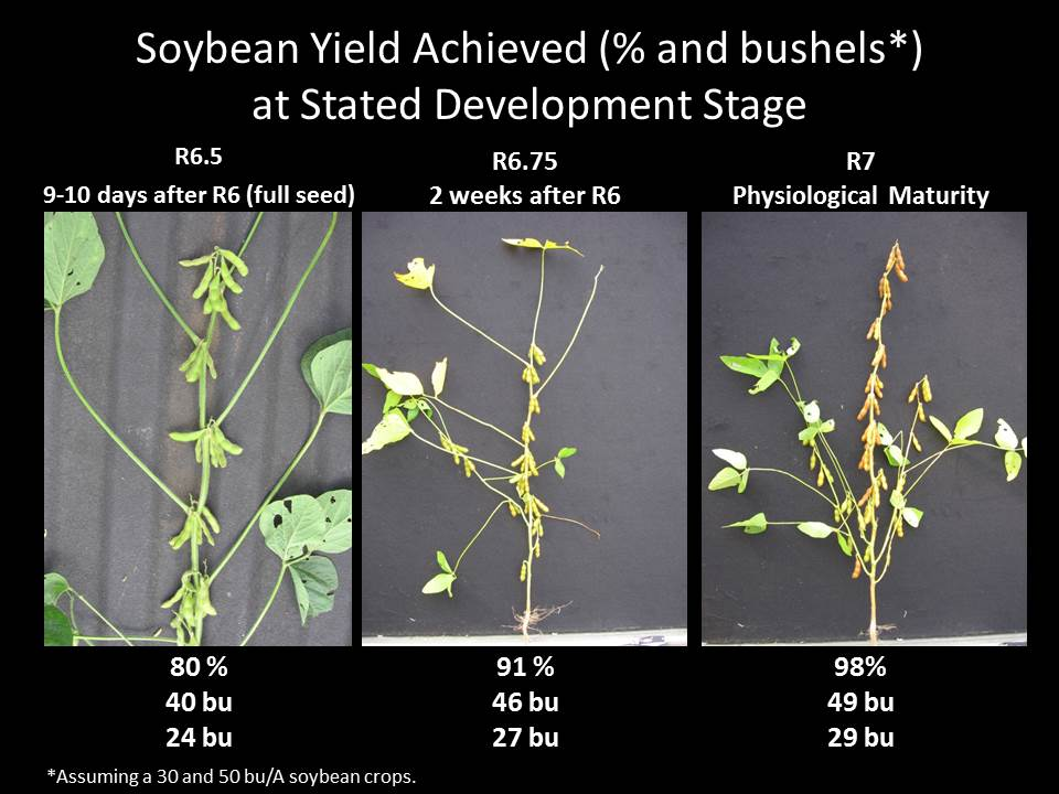 Soybean Yield Achieved