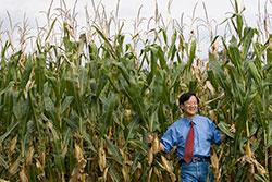 A Professor Standing in Crops